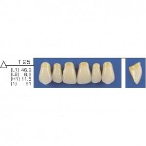 Imagem - DENTE TRILUX ANTERIOR SUPERIOR T25 COR 2B - VIPI (C/ 01 PLACA)