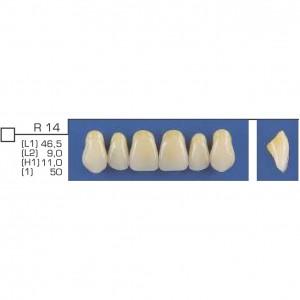 Imagem - DENTE TRILUX ANTERIOR SUPERIOR R14 COR 2B - VIPI (C/ 01 PLACA)