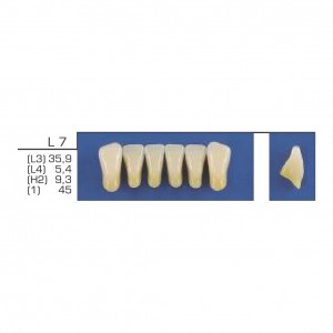 Imagem - DENTE TRILUX ANTERIOR INFERIOR L7 COR 2A - VIPI (C/ 01 PLACA)