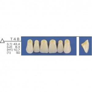 Imagem - DENTE TRILUX ANTERIOR SUPERIOR T4 B COR 2A - VIPI (C/ 01 PLACA)