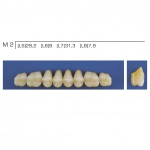Imagem - DENTE TRILUX POSTERIOR SUPERIOR M2 COR 4A - VIPI (C/ 01 PLACA)