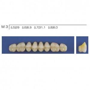 Imagem - DENTE TRILUX POSTERIOR SUPERIOR M3 COR 2B - VIPI (C/ 01 PLACA)