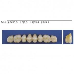 Imagem - DENTE TRILUX POSTERIOR SUPERIOR M4 COR 2B - VIPI (C/ 01 PLACA)