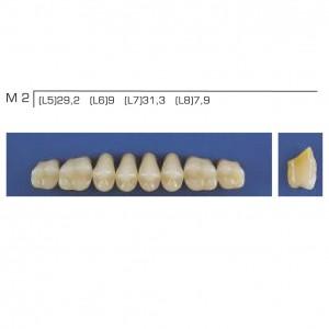 Imagem - DENTE TRILUX POSTERIOR SUPERIOR M2 COR 2B - VIPI (C/ 01 PLACA)