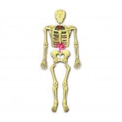 Imagem - Construa o Corpo Humano cód: 2457