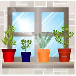 Imagem - Como montar uma horta em casa