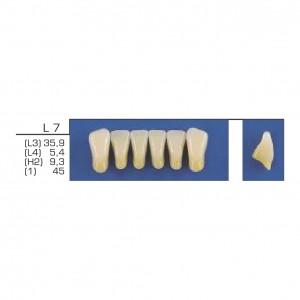 Imagem - DENTE TRILUX ANTERIOR INFERIOR L7 COR 2B - VIPI (C/ 01 PLACA)