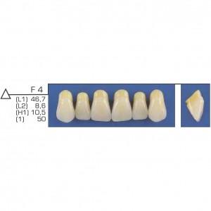 Imagem - DENTE TRILUX ANTERIOR SUPERIOR F4 COR 4A - VIPI (C/ 01 PLACA)