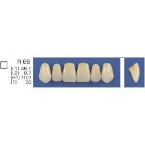 Imagem - DENTE TRILUX ANTERIOR SUPERIOR R66 COR 2B - VIPI (C/ 01 PLACA)