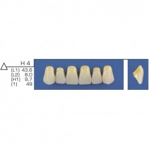 Imagem - DENTE TRILUX ANTERIOR SUPERIOR H4 COR 4A - VIPI (C/ 01 PLACA)