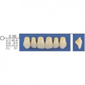 Imagem - DENTE TRILUX ANTERIOR SUPERIOR O36 COR 1C - VIPI (C/ 01 PLACA)