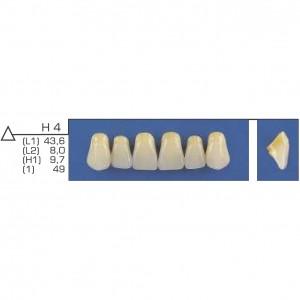 Imagem - DENTE TRILUX ANTERIOR SUPERIOR H4 COR 1A - VIPI (C/ 01 PLACA)