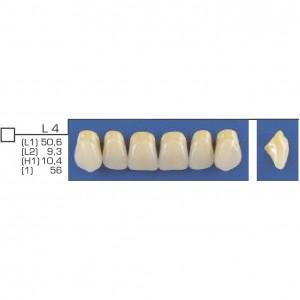 Imagem - DENTE TRILUX ANTERIOR SUPERIOR L4 COR 2A - VIPI (C/ 01 PLACA)