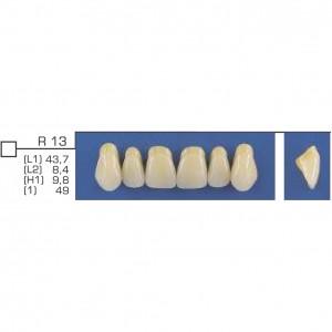 Imagem - DENTE TRILUX ANTERIOR SUPERIOR R13 COR 2A - VIPI (C/ 01 PLACA)