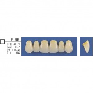 Imagem - DENTE TRILUX ANTERIOR SUPERIOR R66 COR 2A - VIPI (C/ 01 PLACA)