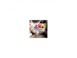 Imagem - Oculos de Sol Goodr Gralbino Albinorhino - 20000053GRALBINOALBINORHINO96
