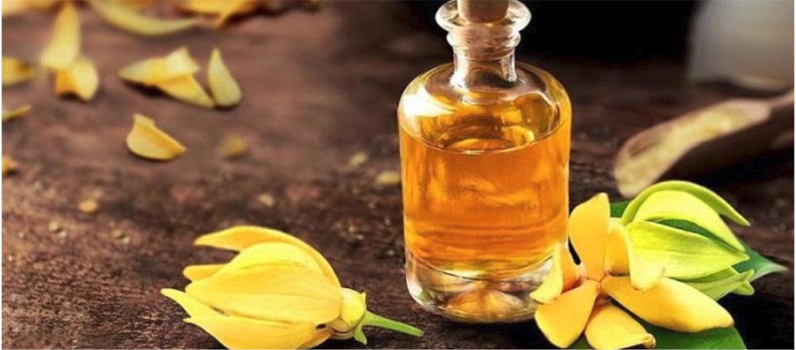 Imagem - Conheça o óleo essencial de Ylang Ylang