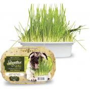 Grama Digestiva Cachorros Digestive Grass 50g
