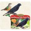 Ração Oleosa para Sabiá e Pássaro Preto com Laranja Nutripassaros 500g