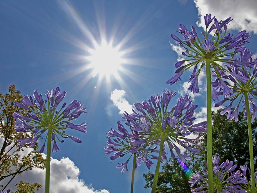 Imagem - Soluções para proteção contra o sol no seu jardim
