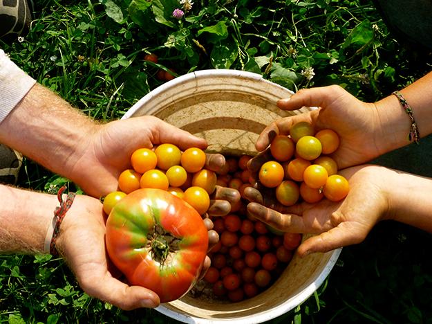 Imagem - Dicas e cuidados para uma horta totalmente orgânica