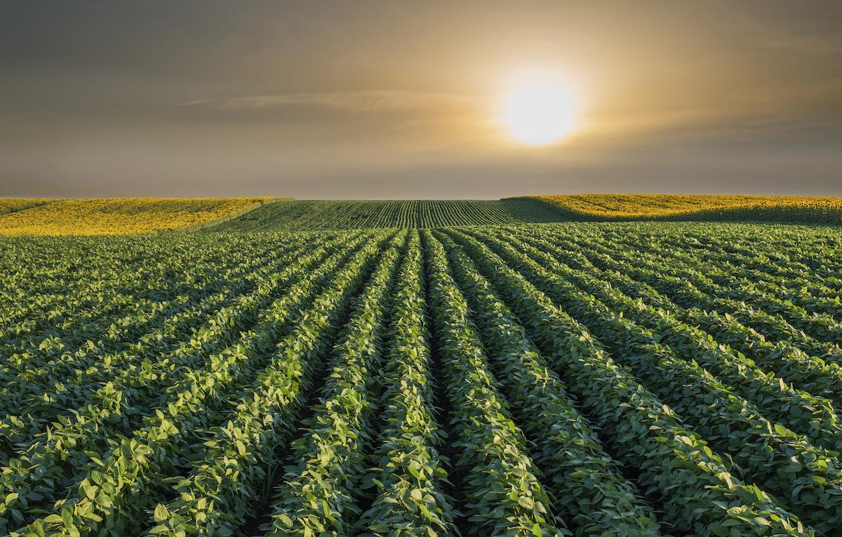 Imagem - Sua plantadeira está regulada? Veja dicas para garantir uma boa semeadura