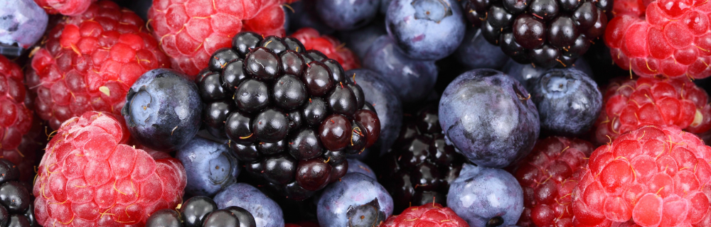 Um amor chamado Frutas Vermelhas